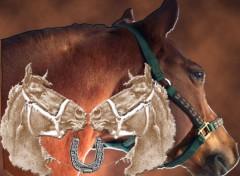 Fonds d'écran Animaux cheval porte bonheur