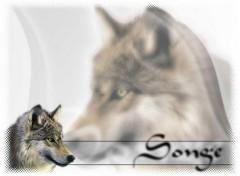 Fonds d'écran Animaux Songe