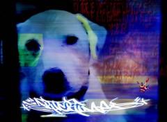 Fonds d'écran Art - Numérique 123564