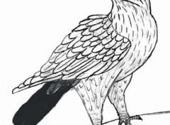 Fonds d'écran Art - Crayon Aigle2