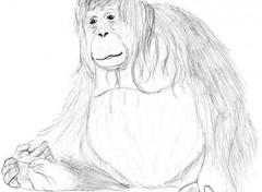 Fonds d'écran Art - Crayon Orang-outan