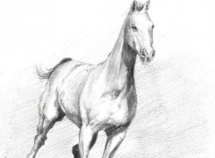 Wallpapers Art - Pencil un ti cheval qui court qui courrrrrt !...
