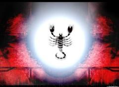 Fonds d'écran Art - Numérique scorpion