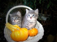 Wallpapers Animals chatons d'Halloween