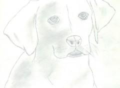 Fonds d'écran Art - Crayon Labrador