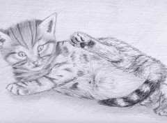 Wallpapers Art - Pencil chaton