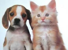 Fonds d'écran Animaux chat et chien