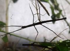 Fonds d'écran Animaux insecte