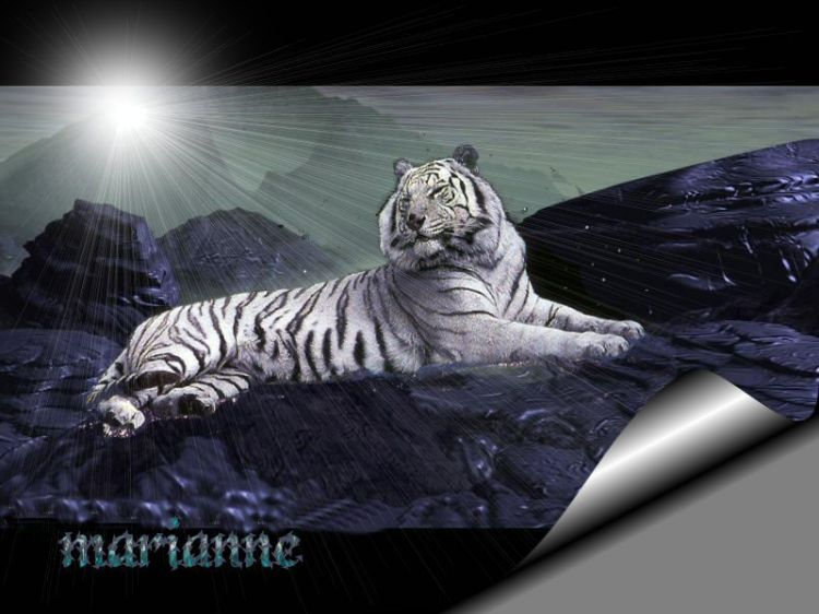 Wallpapers Animals Felines - Tigers Wallpaper N°9520