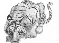 Wallpapers Art - Pencil Tigre