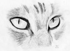 Wallpapers Art - Pencil Regard felin