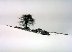 Fonds d'écran Nature arbre dans la neige