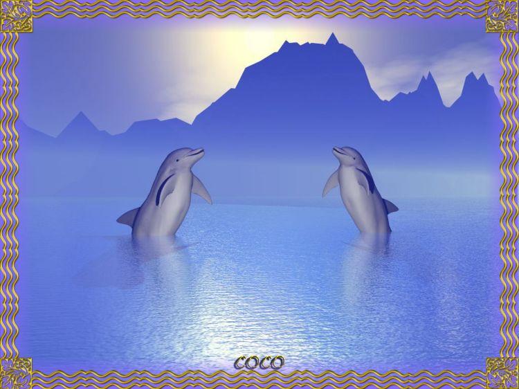 Fonds d'écran Animaux Vie marine - Dauphins 2 Dauphins