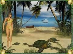 Fonds d'écran Animaux Plage des tortues