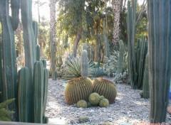Fonds d'écran Nature jardins de majerelle a Marrackech