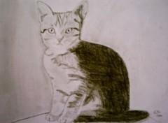 Wallpapers Art - Pencil P'tit chaton