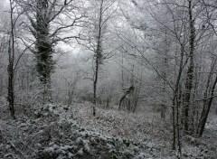 Fonds d'écran Nature Foret mayennaise sous la neige!!