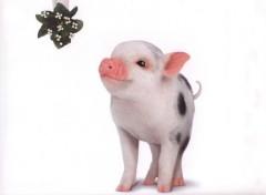Fonds d'écran Animaux babe le cochon