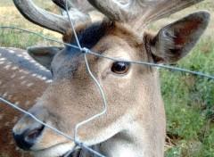 Fonds d'écran Animaux Captivite