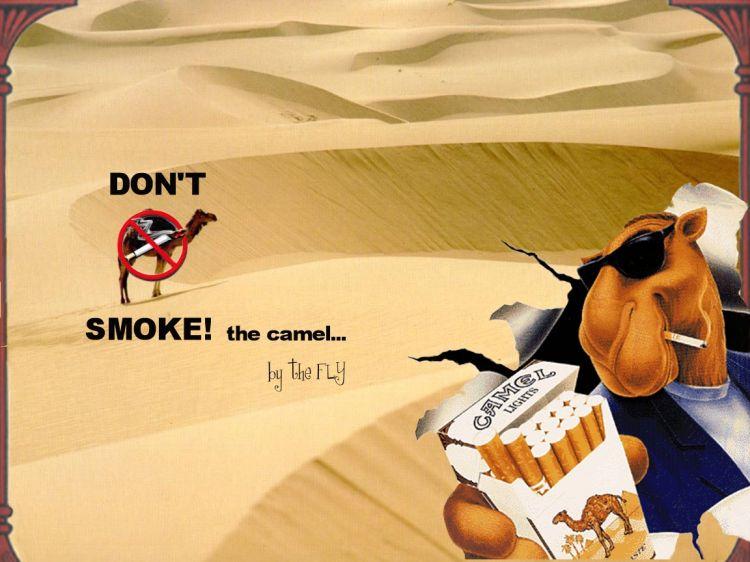 Fonds d'écran Humour Clins D'oeil Don't smoke the Camel