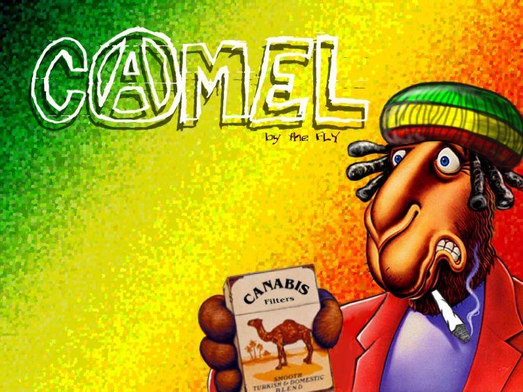Fonds d'écran Humour Fausses pubs Camel-Rasta
