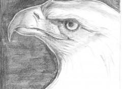 Fonds d'écran Art - Crayon Eagle