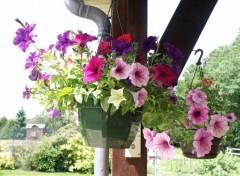 Fonds d'écran Nature Fleurs suspendues