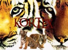 Fonds d'écran Animaux Tigres