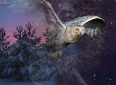 Wallpapers Animals au clair de lune