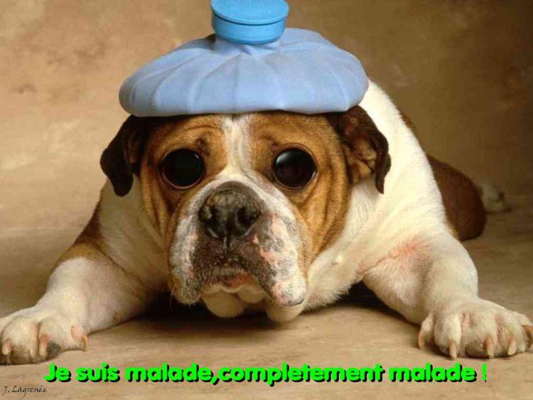 Wallpapers Humor Animals Dog