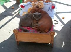 Fonds d'écran Animaux Heureux comme chien et chat