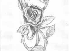 Wallpapers Art - Pencil rose version old school