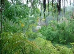 Fonds d'écran Nature Pluie tropicale (Sénégal)