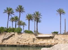 Fonds d'écran Voyages : Europe Palmier de Javéa