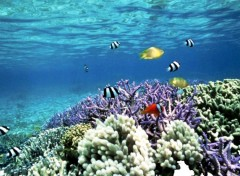 Wallpapers Animals poissons tropicaux