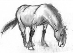Fonds d'écran Art - Crayon Cheval