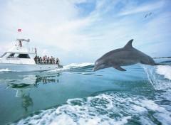 Wallpapers Animals dauphin hors de l'eau