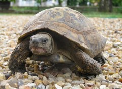 Fonds d'écran Animaux tortue agressive