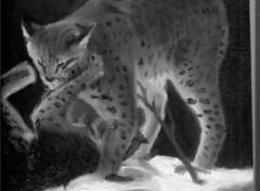 Wallpapers Art - Painting petits lynx qui jouent  ensembles..