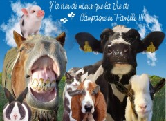 Wallpapers Animals Photo de famille campagnarde