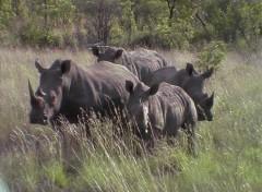 Wallpapers Animals troupeaux de Rhinocéros