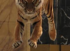 Wallpapers Animals Tigresse