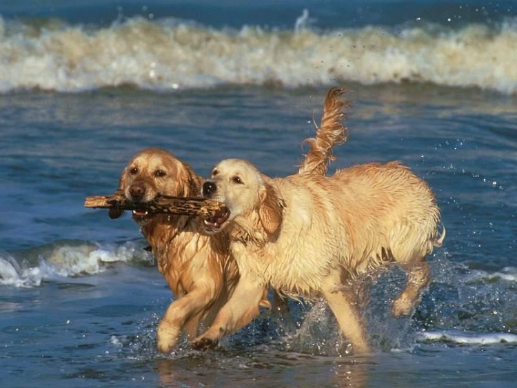 Wallpapers Animals Dogs Le Partage