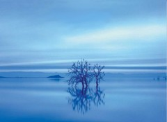 Wallpapers Nature BlueTree