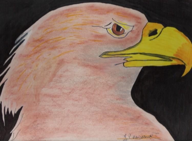 Fonds d'écran Art - Crayon Animaux - Oiseaux - Rapaces aigle