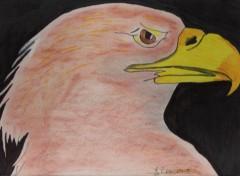 Fonds d'écran Art - Crayon aigle