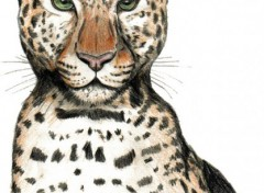Fonds d'écran Art - Crayon Leopard