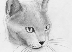 Wallpapers Art - Pencil Chat