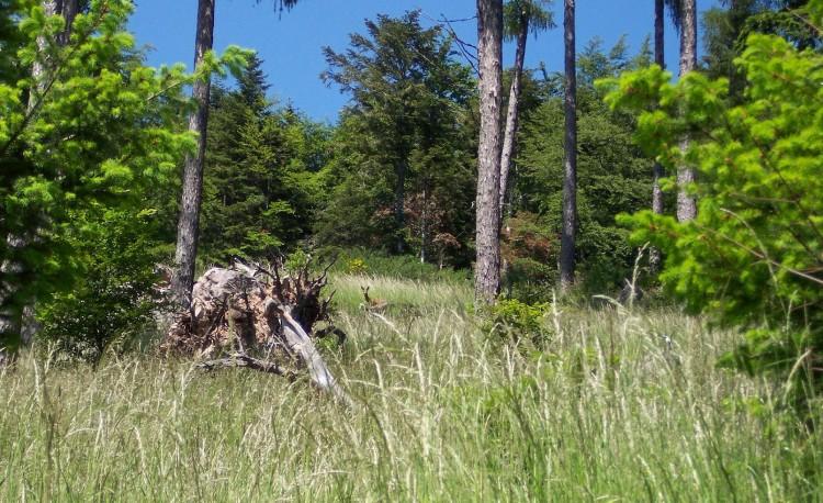 Fonds d'écran Nature Arbres - Forêts Bibiche ou est tu ?