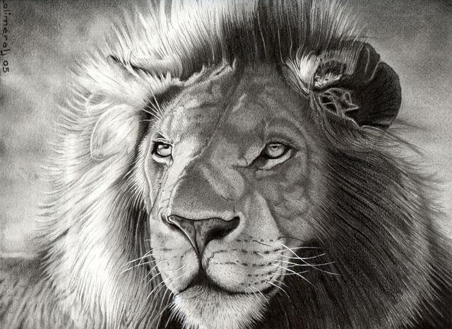 Wallpapers Art - Pencil Animals - Felines Gros minet